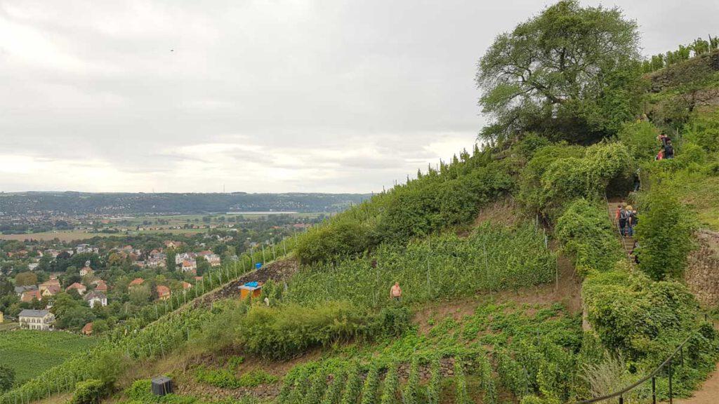 Aufstieg über den Bilz-Rundweg